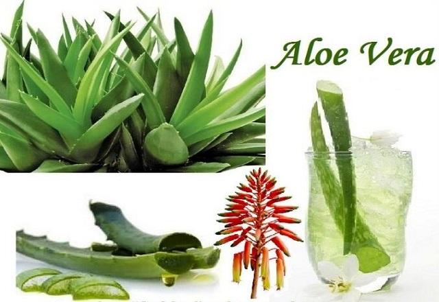 Aloe Vera Premium Drinks All Set to Make a Revolution